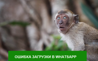 Ошибка загрузки Whatsapp